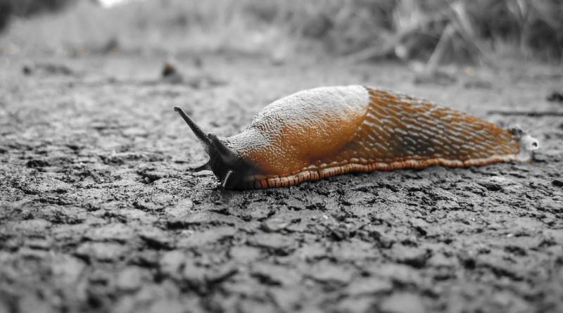 Un estudio demuestra que el moco, no las infecciones, infligen daño en la fibrosis quística