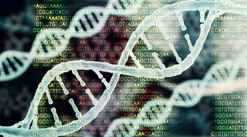Los investigadores identifican el factor genético que predispone a portadores de mutación específica a la HAP familiar