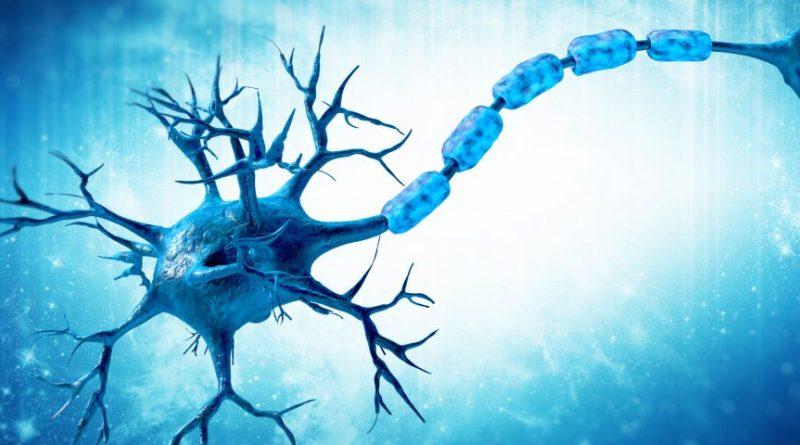 Mayzent disminuye la inflamación en las meninges cerebrales, previene la migración de los linfocitos para reducir la desmielinización, sugiere un estudio en ratones