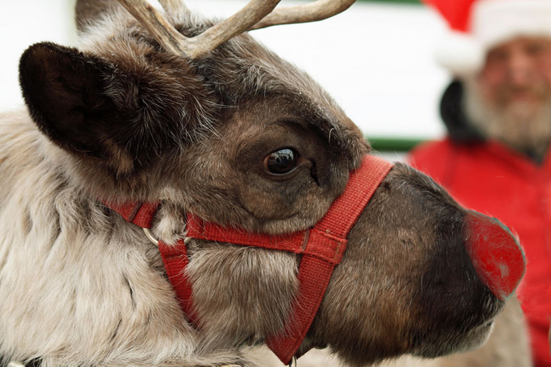 Bullied No More: Rudolph's Revenge