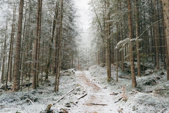 Sunday's Society6 - Regnumsaturni, For now I am winter landscape photography