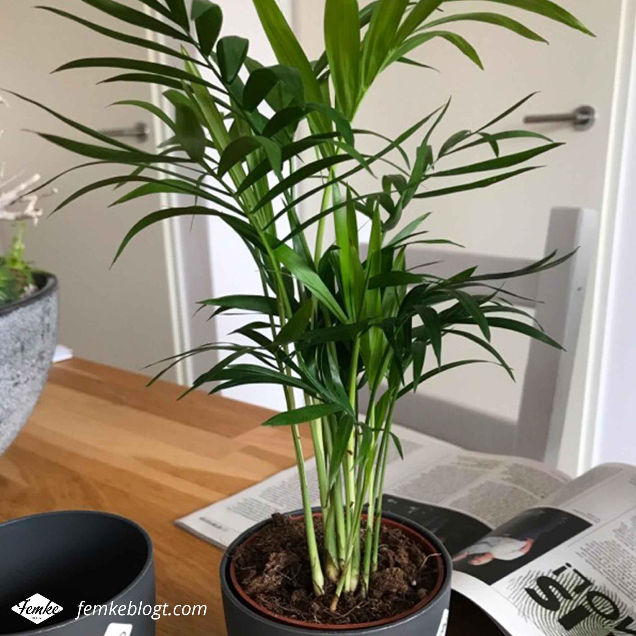 Maandoverzicht januari | Nieuwe plantjes gekocht