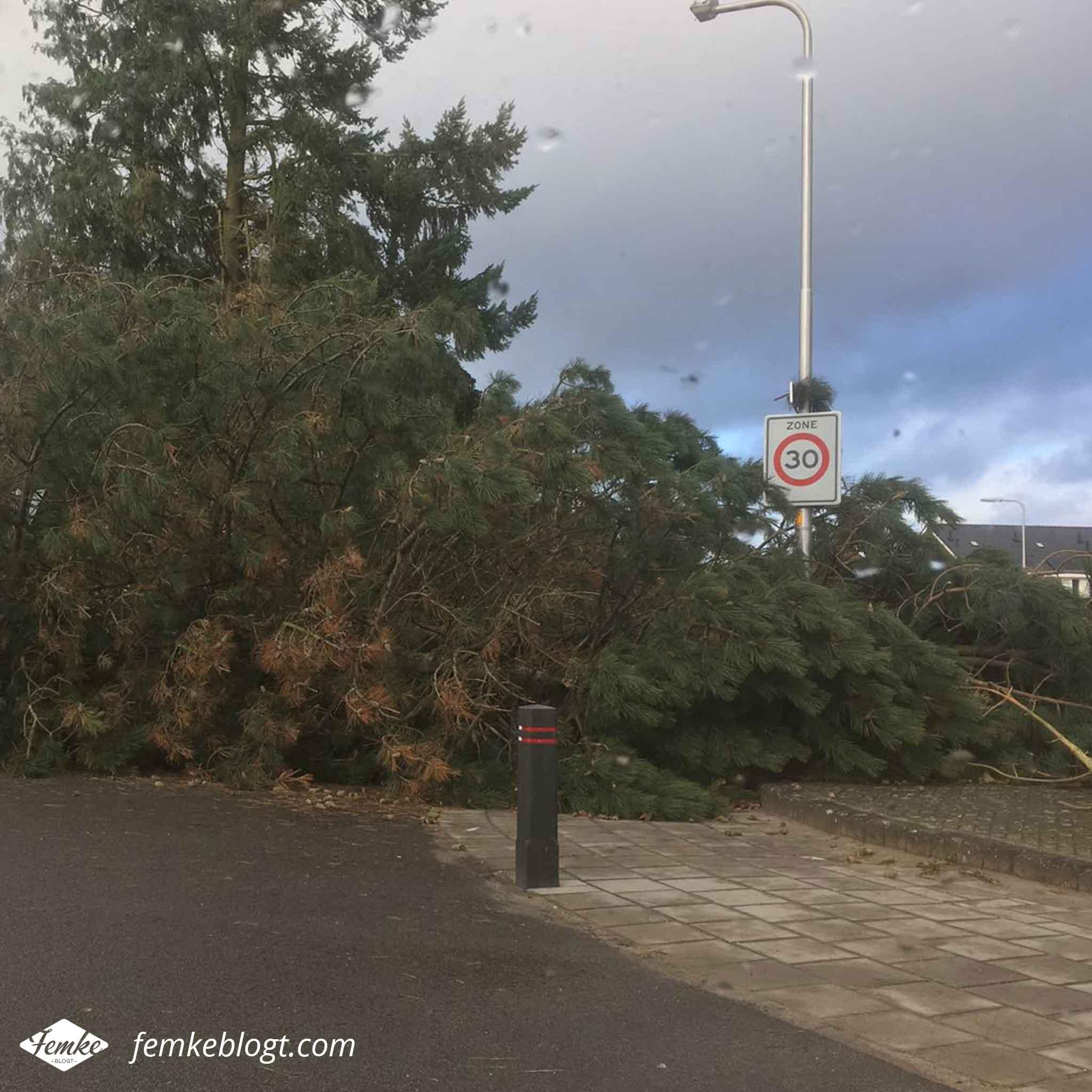 Maandoverzicht januari | Door de storm waren er veel bomen omgevallen
