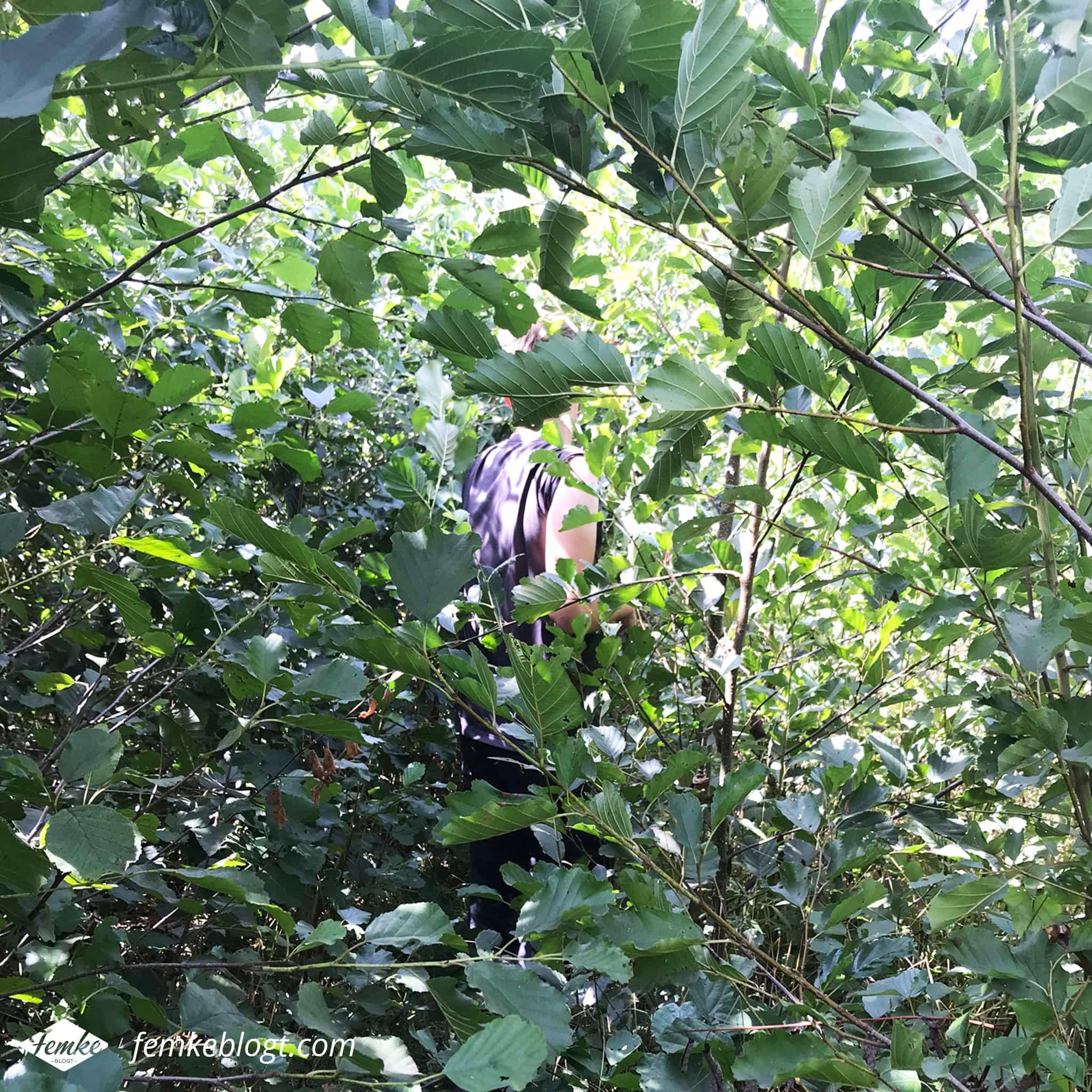 Maandoverzicht augustus | Jungle wandeling
