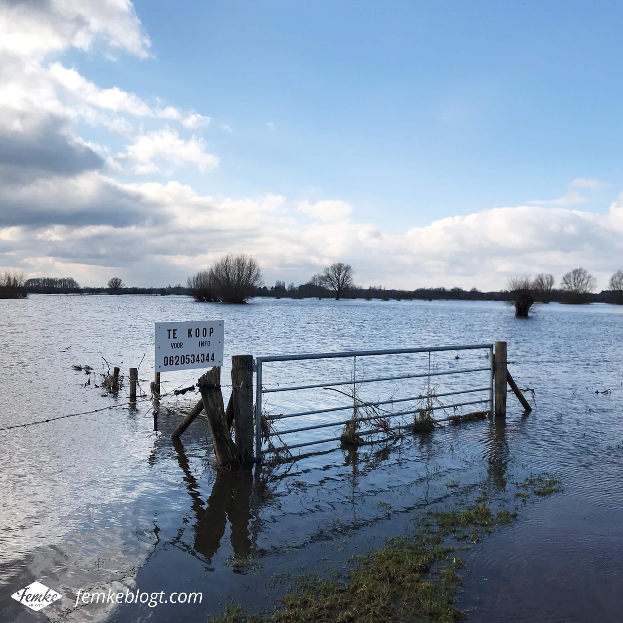 Maandoverzicht februari | Hoog water bij de IJssel