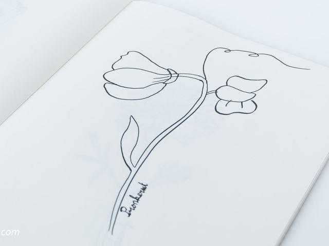 31 Dagen bloemen #6 - Pronkerwt tekenen
