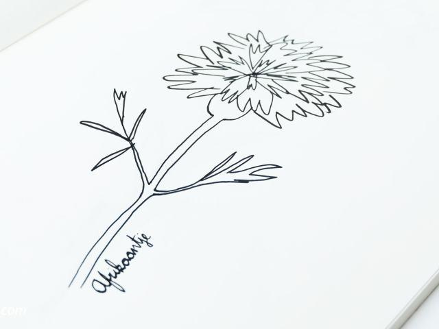 31 Dagen bloemen #7 | Elke maand een nieuwe bloem. In deel 7 gaan we het Afrikaantje tekenen.
