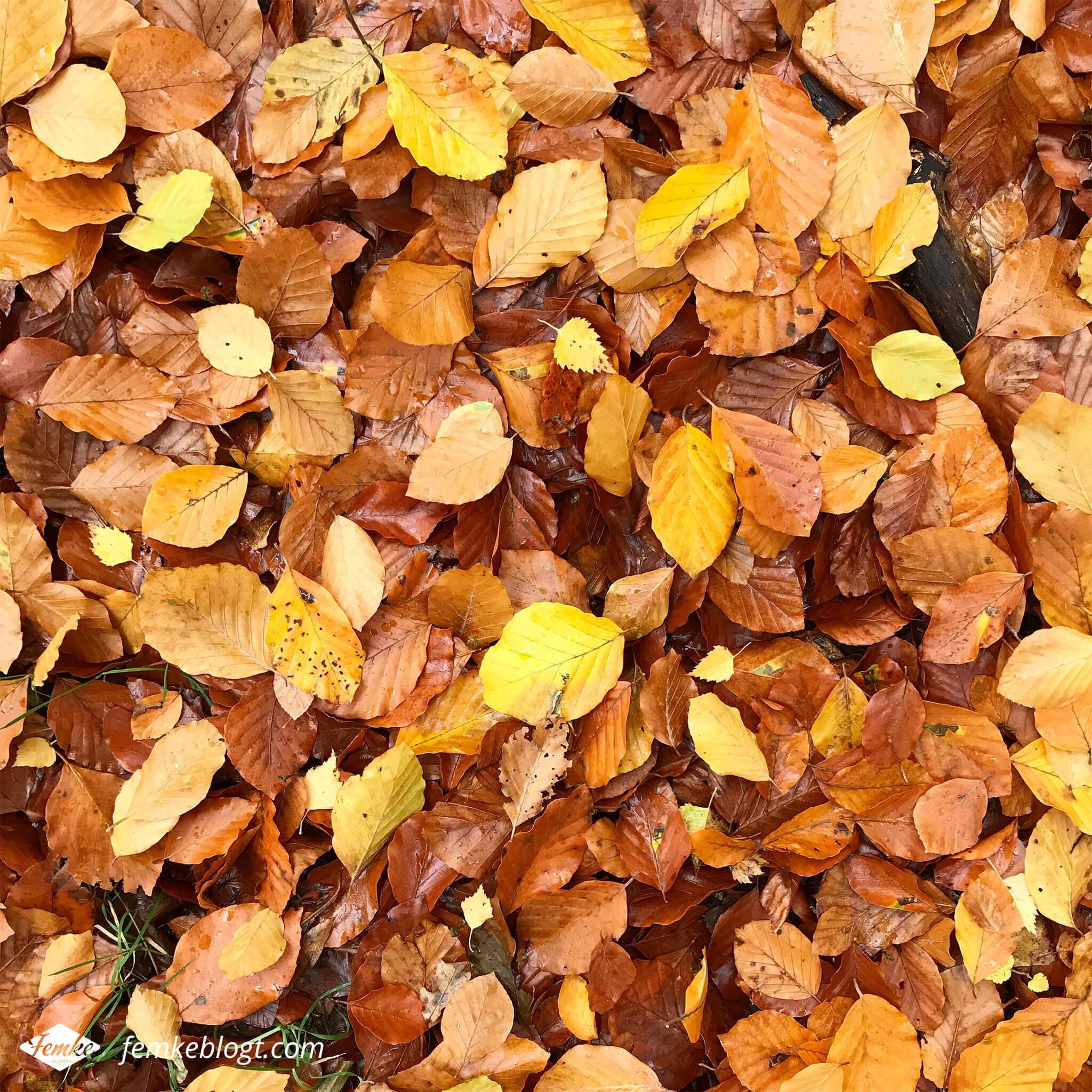 Maandoverzicht november | Herfstwandeling