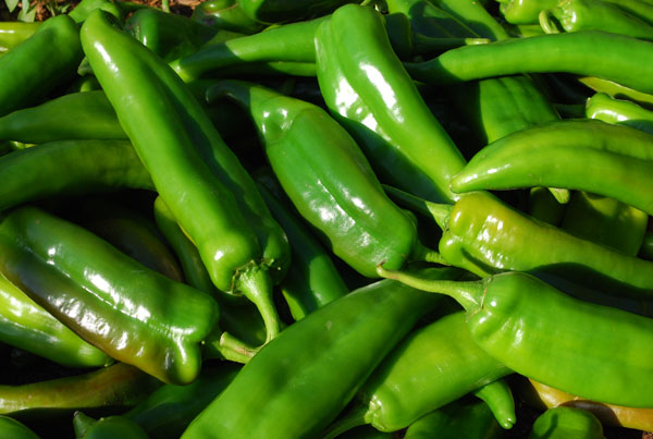 green-chili-harvest-cls1-lg