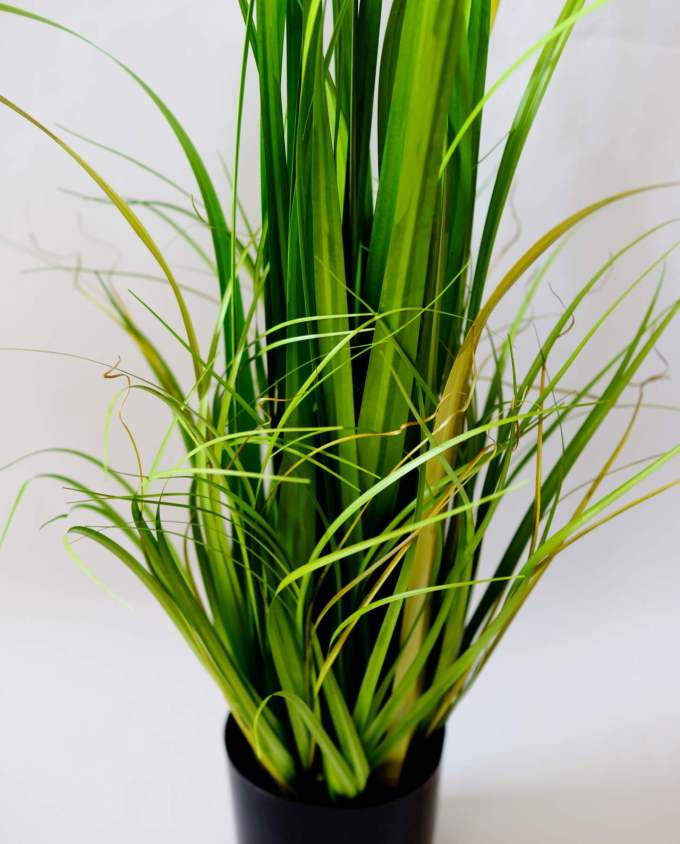 A plant of green leaves in pot to decorate your space, for indoors.
