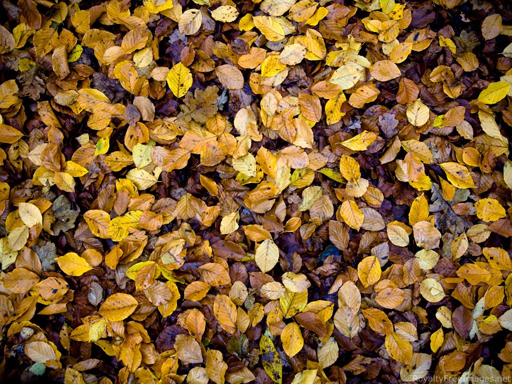 Image result for dead leaves