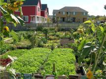 High Point Community Garden Seattle