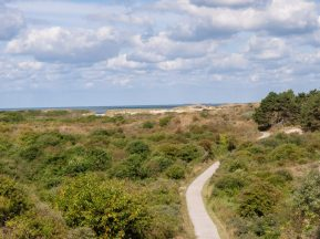 View over sand dunes with grass, bushes and trees near Domburg, Zeeland, Netherlands