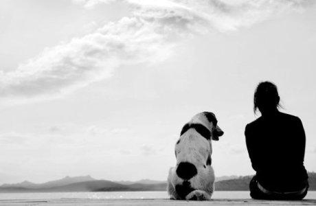 Верными бывают только собаки?