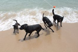 Playa para perros - Playa de Llevant