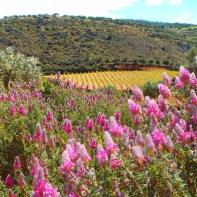 natur-kreta-griechenland