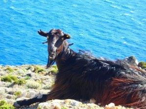 Autotour West Kreta