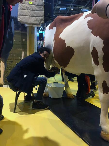traire une vache a la main