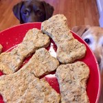 Dogs Stare at Treats