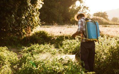 """Efectos del clorpirifós, el pesticida más usado de España y que la Unión Europea prohíbe por ser un """"peligro para la salud"""""""