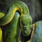 9 Cursos Online de Python de graça