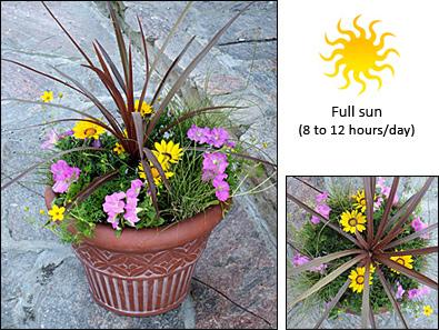 Fernlea Flowers Ltd Container Garden Recipe 1