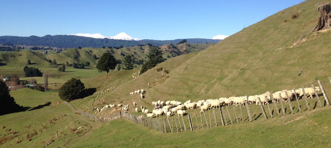 Fernleaf sheep