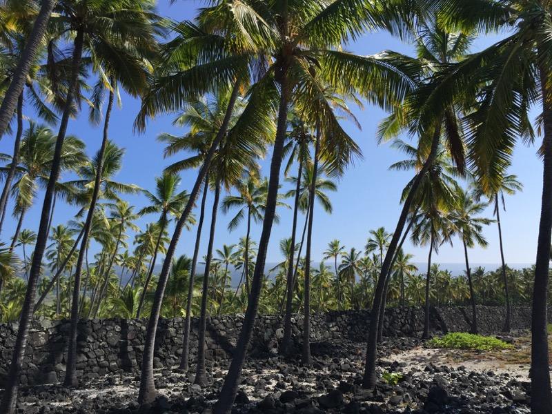 Big Island Hawaii - Captain Cook - Historical Park - Palmenmeer