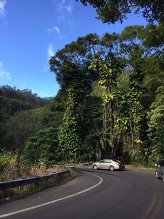 Maui Hawaii - Hana HWY - schlängel Strassen in grün