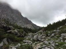 Leutasch - Aufstieg über Stock und Stein