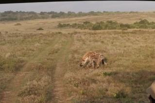 Afrika Addo Elephant Park - Hyäne