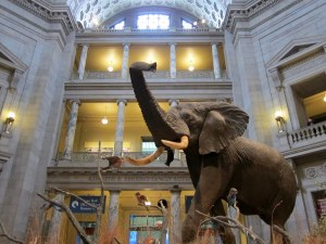 Walking With Dinosaurs at the National Museum of Natural History
