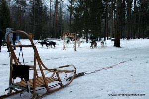 A Dog Sledding Adventure in Latvia