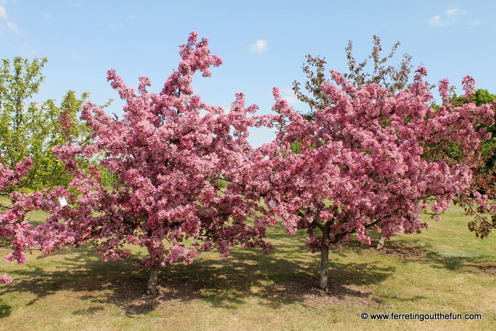 Dobele Fruit Trees