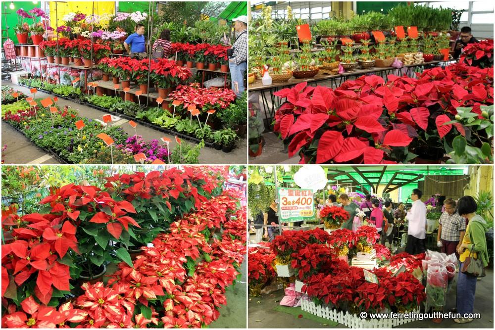 taipei weekend flower market