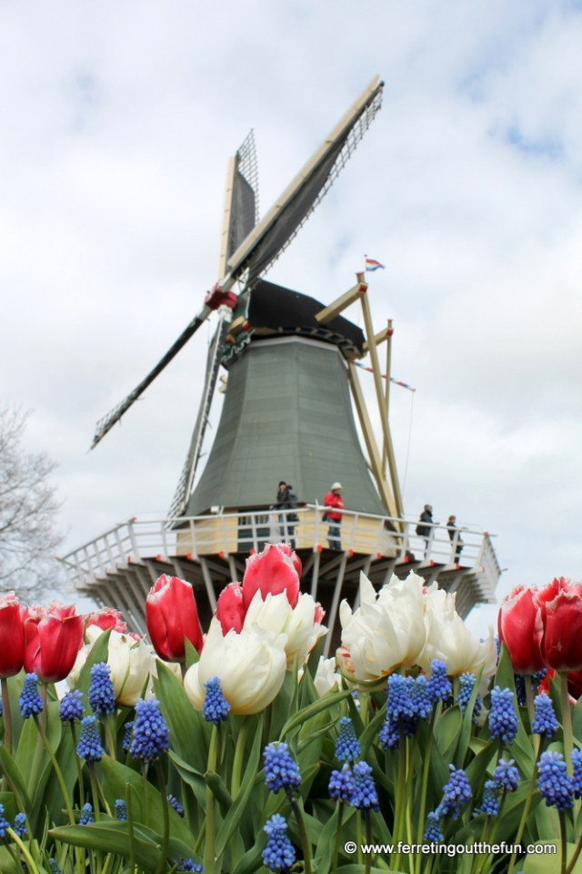 Springtime in Holland