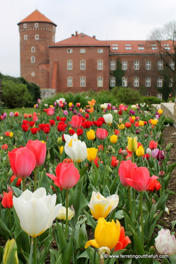 Tulips bloom in front of Wawel Castle in Krakow, Poland