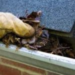 Why Clean Out My Gutters?