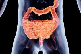 ¿Qué relación tiene el Intestino con la Fertilidad? mucha