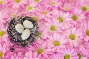 Edad límite para Congelar Óvulos: ¿Hasta que edad se puede?