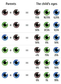 Choose Your Babys Eye Color | The Fertility Institutes ...