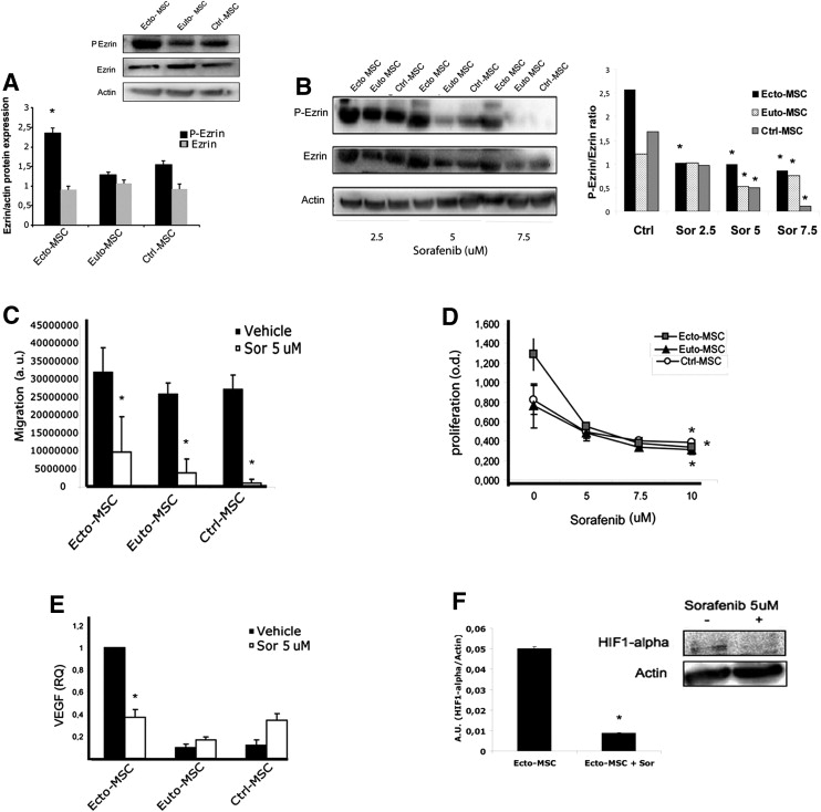 Sorafenib inhibits growth, migration, and angiogenic
