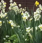 spring-workshops
