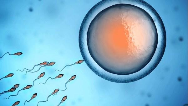 fertilização do óvulo humano