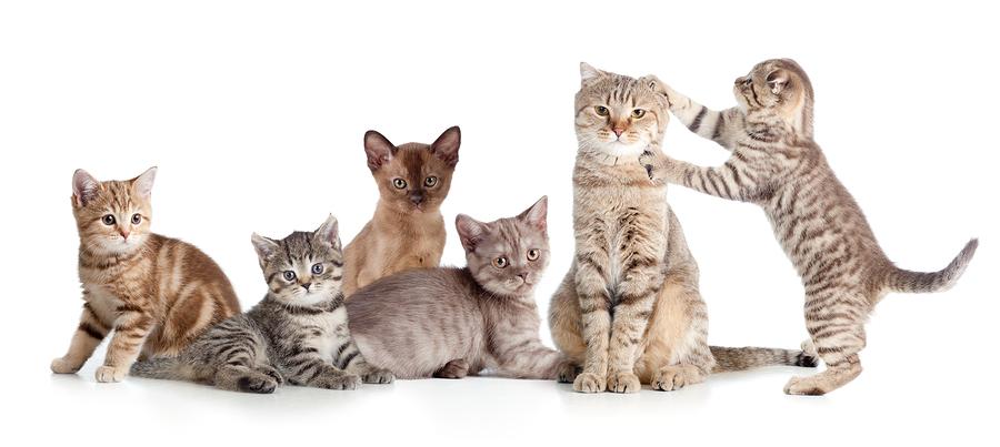 5 extraordinarily cute cat
