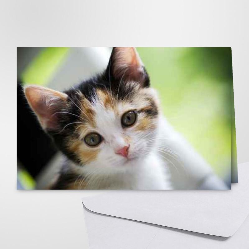 https www feteanniversaire fr cartes carte animaux carte chat