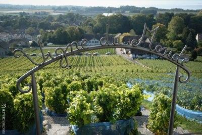 vigne du monde