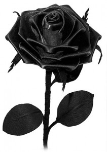 English Leather Rose
