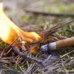 zigarettenstummel_waldboden_feuer