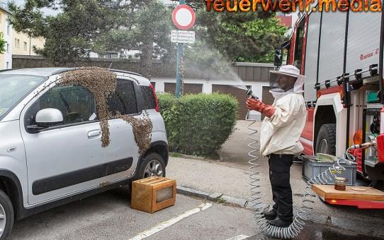 Multiple Tierrettung - Bienenschwarm lässt sich auf einem Pkw nieder